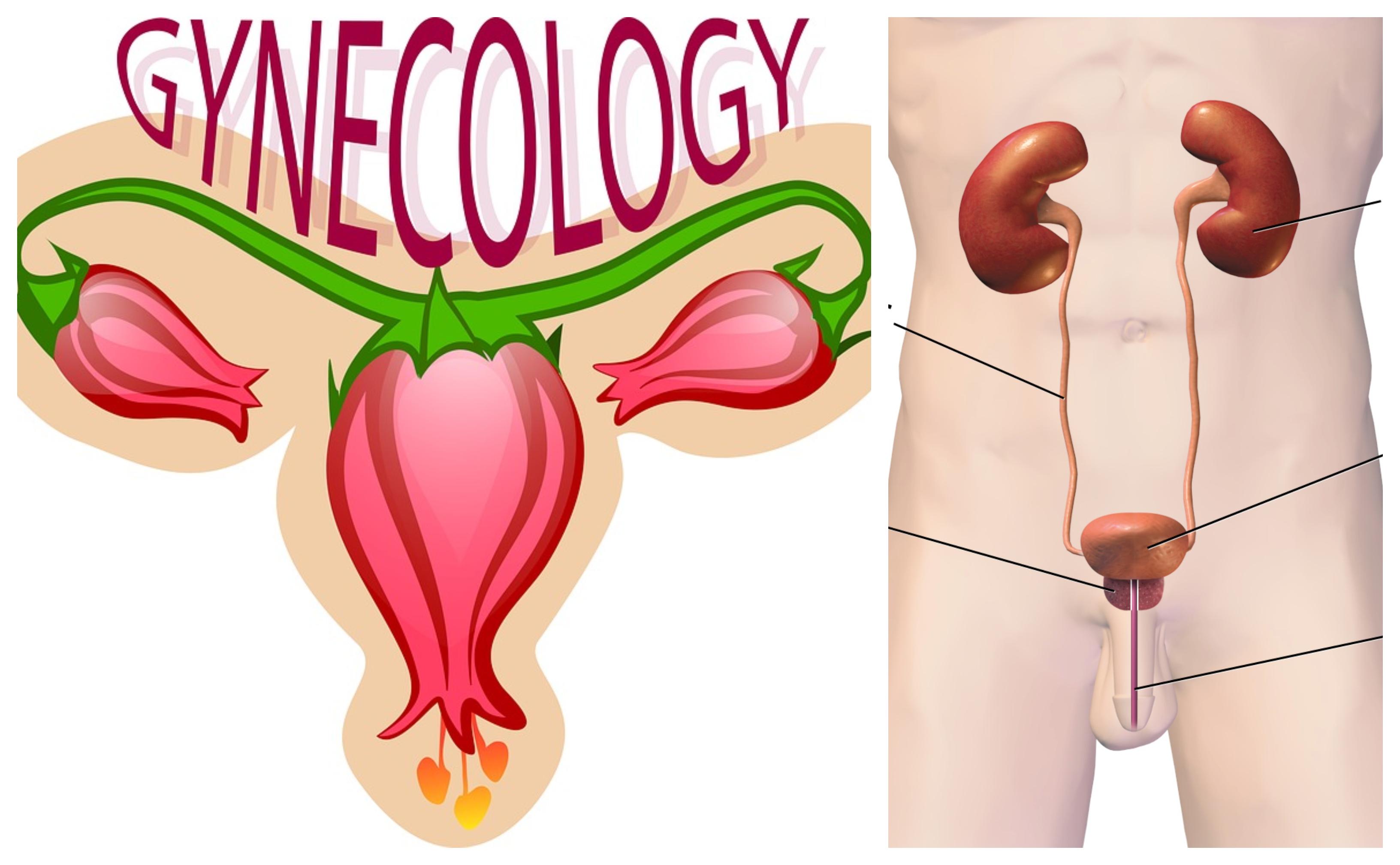 Gynecology/ Nephrology/ Urology/ Proctology